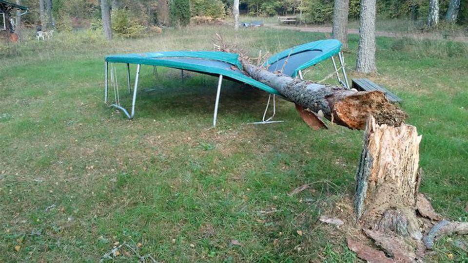 Träd som krossat en studsmatta